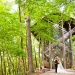 In A Dream, Thorncrown Chapel, Wedding Destination